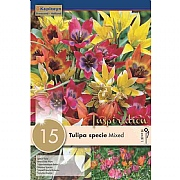 Tulipa Specie Mixed Colours (15 Bulbs)