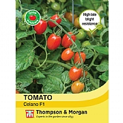 Thompson & Morgan Tomato Celano Seeds