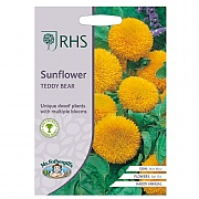 RHS Sunflower Teddy Bear Seeds