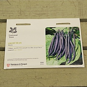 Thompson & Morgan National Trust Dwarf Bean Mistic
