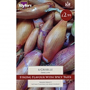 Shallot Griselle (Pack of 6)