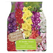 Beautiful Gardens Mixed Border Gladioli - 50 Bulbs