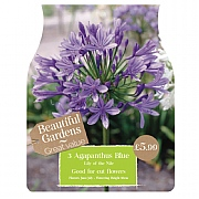 Beautiful Gardens Agapanthus Blue - 3 Bulbs