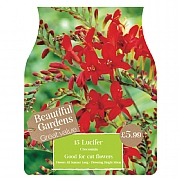 Beautiful Gardens Crocosmia Lucifer - 15 Bulbs