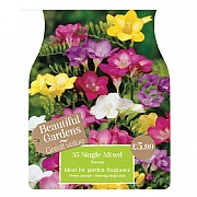 Beautiful Gardens Freesia Single Mixed - 35 Bulbs