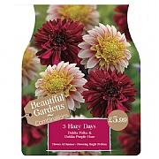 Beautiful Gardens Dahlia Hazy Days - 3 Bulbs