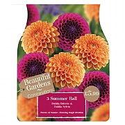Beautiful Gardens Dahlia Summer Ball - 3 Bulbs