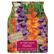 Beautiful Gardens Gladioli Violet Sunset - 20 Bulbs