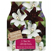 Beautiful Gardens Lily Choc Ice - 5 Bulbs