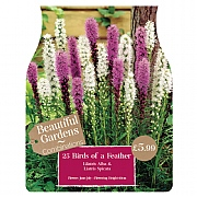 Beautiful Gardens Liatris Birds Of A Feather - 25 Bulbs