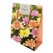 Dahlia Colour Gift Bag - 5 Tubers