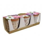 Grow Your Own Indoor Windowsill Flowers Gift Set