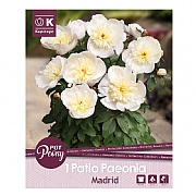 Paeonia Patio Madrid - 1 Bulb