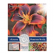 Lilium Asiatic Forever Susan - 3 Bulbs