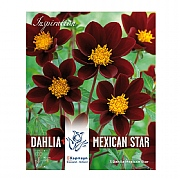 Dahlia Mexican Star - 3 Bulbs