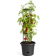 Elho Green Basics 33cm Tomato Pot - Living Black