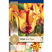 Tulip Parrot Flaming Parrot - (6 Bulbs)