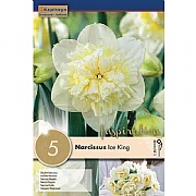Narcissus 'Ice King' - (5 Bulbs)
