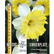 Narcissus Large Cupped Dinnerplate (3 Bulbs)