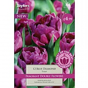Tulip Double Blue Diamond (12 Bulbs)