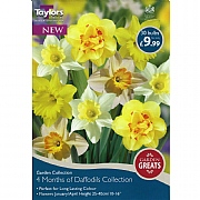 Taylors Bulbs 4 Months Of Daffodils Collection (30 Bulbs)