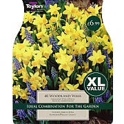 Woodland Walk (40 Bulbs)