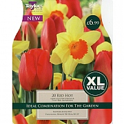 Red Hot Narcissus & Tulip Combination Pack (20 Bulbs)