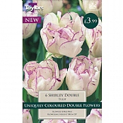 Tulip Shirley Double (6 Bulbs)