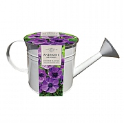 Anemone Indoor Watering Can Planter (5 Bulbs)