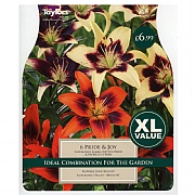 Lilium Pride & Joy - 6 Bulbs