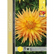 Dahlia Cactus Gold Crown - 3 Bulbs