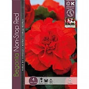 Begonia Non-Stop Red - 4 Bulbs