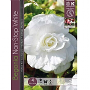 Begonia Non-Stop White - 4 Bulbs