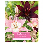 Beautiful Gardens Lilium Asiatic Day Dreamer - 6 Bulbs