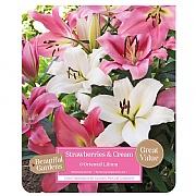 Beautiful Gardens Lilium Oriental Strawberries & Cream - 6 Bulbs