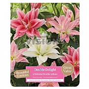 Beautiful Gardens Lilium Oriental Double Delight - 3 Bulbs