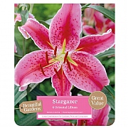 Beautiful Gardens Lilium Stargazer - 6 Bulbs