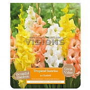 Beautiful Gardens Gladioli Tropical Sunrise - 20 Bulbs