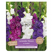 Beautiful Gardens Gladioli Lavender Dream - 20 Bulbs