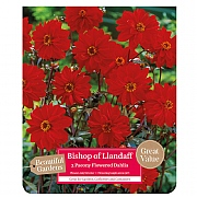 Beautiful Gardens Dahlia Bishop Of Llandaff - 3 Bulbs