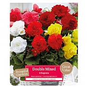 Beautiful Gardens Begonia Double Delight - 6 Bulbs