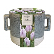 Tulip Candy Prince Indoor Planter