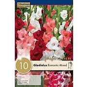 Gladiolus Romantic Mixed - 10 Bulbs
