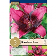 Lilium Purple Dream - 3 Bulbs