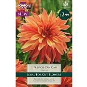 Dahlia French Can-Can - 1 Bulb