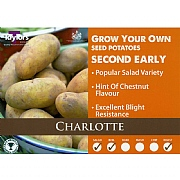 Charlotte Second Early Seed Potatoes (Bag of 15)