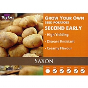 Saxon Second Early Seed Potatoes (Bag of 15)
