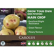 Carolus Main Crop Seed Potatoes (Bag of 15)