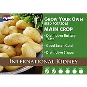 International Kidney Main Crop Seed Potatoes (Bag of 15)
