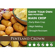 Pentland Crown Main Crop Seed Potatoes (Bag of 15)